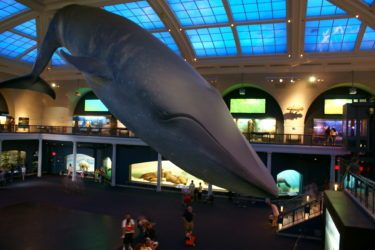 The American Museum of Natural History NYC Semi-Private Guided Tour