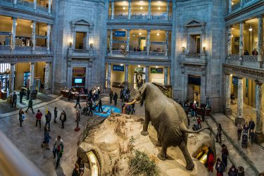 Smithsonian Natural History Museum Semi-Private Tour