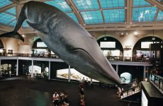Museum-Tour-American-History-Natural