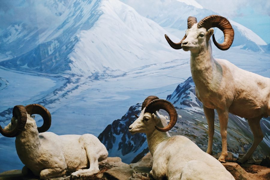 Natural-Museum-American-History-NYC-tour
