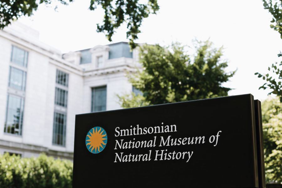 Tour-Natural-History-DC-Museum-Washington-Smithsonian
